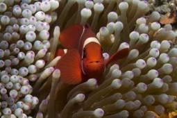 Captain Nemo wartet schon
