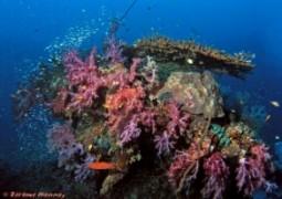 Korallen so weit das Auge reicht